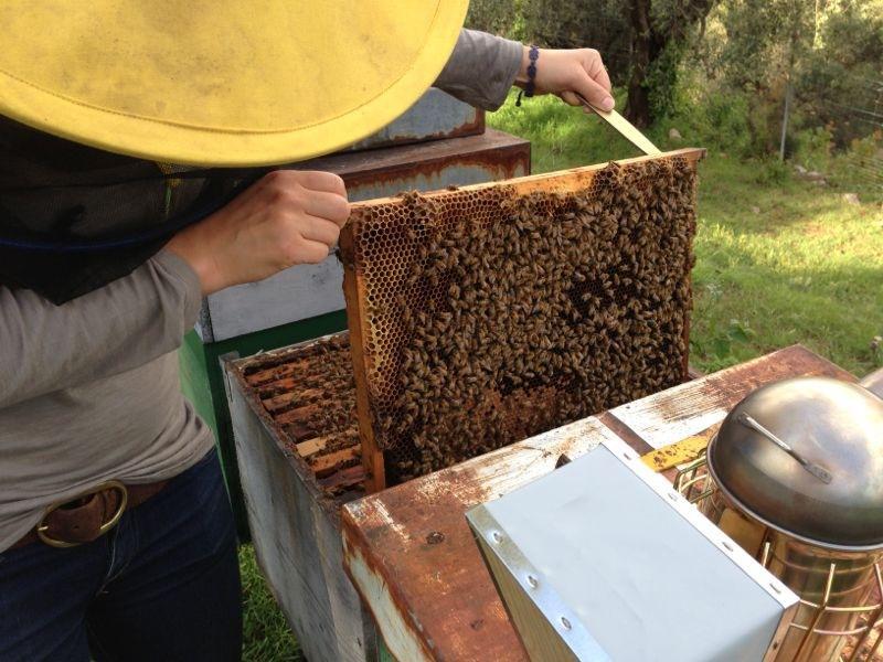 (Italiano) Le api arrivano a San Mattia