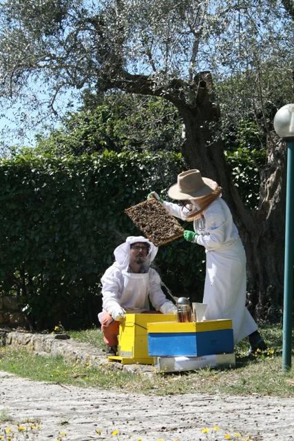 api e apicolotori