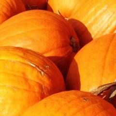 Risotto with pumpkin and amaretto