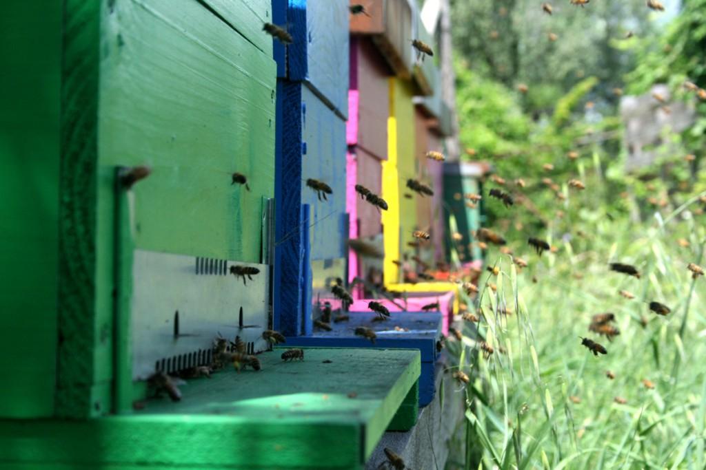 api in volo def